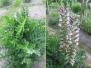 Évelő és egynyári növények