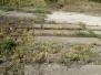 Invazív növényállományok felmérése Kárpátalja vasútállomásain